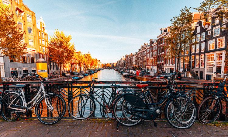 Trueffeljagd-Amsterdam.jpg