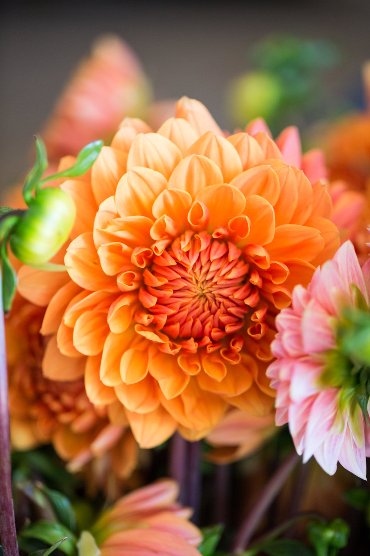 GardenDistrict-Camflor-SelaviePhoto-80.jpg