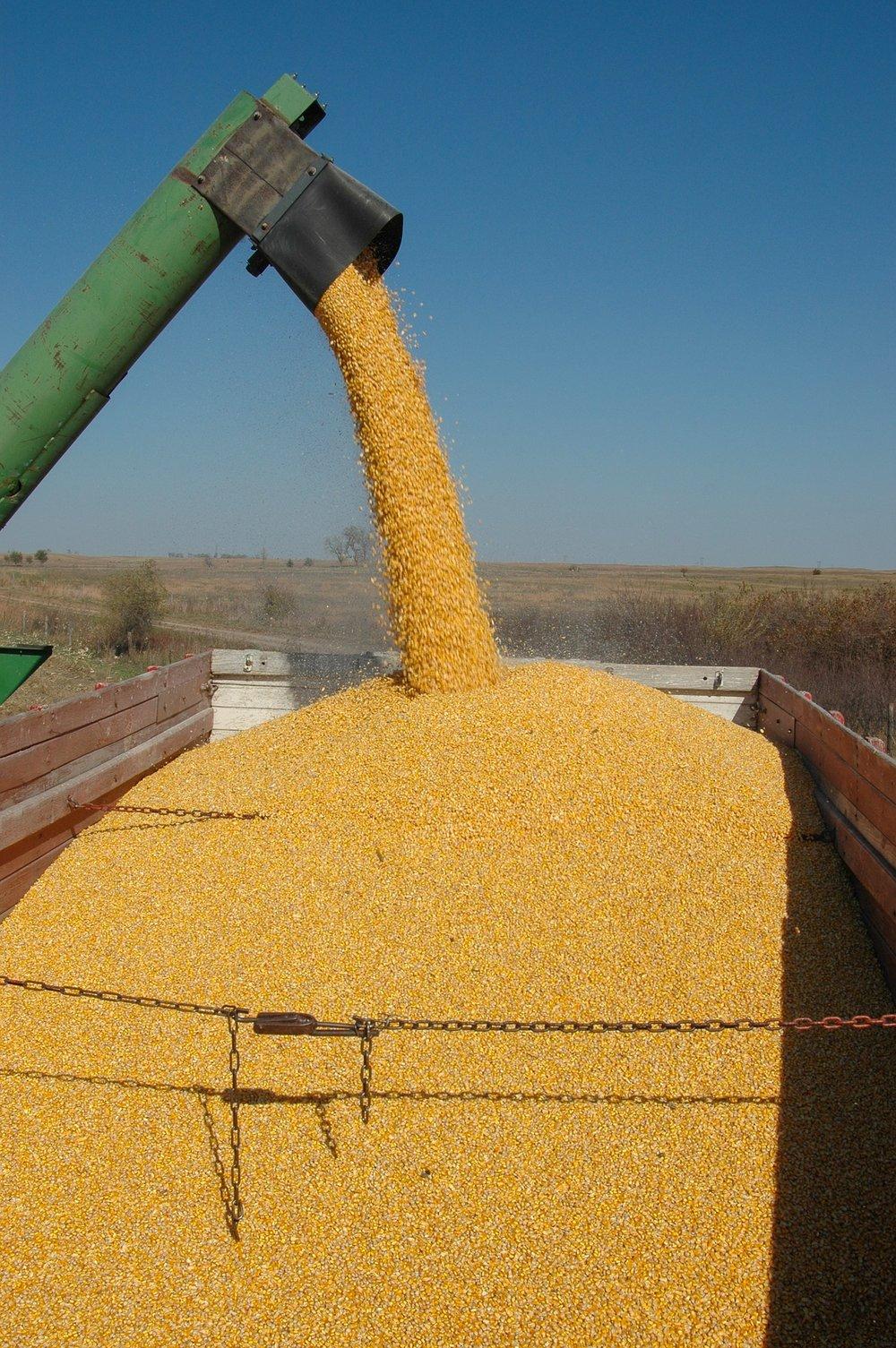 Gracias al maíz se consigue etanol (y reducir el CO2)