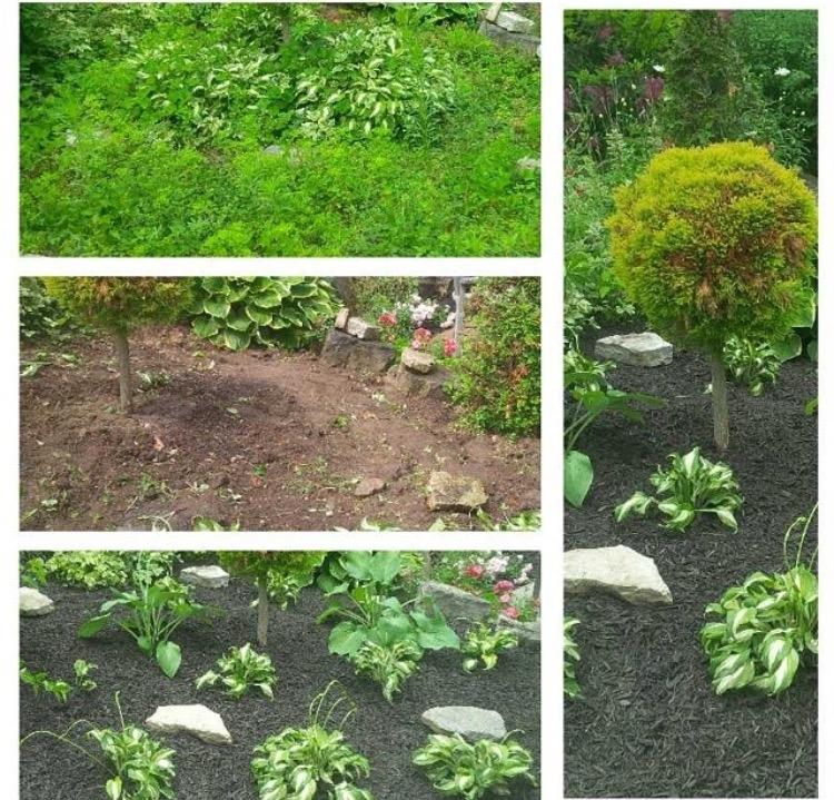 Overgrown garden rebuilt