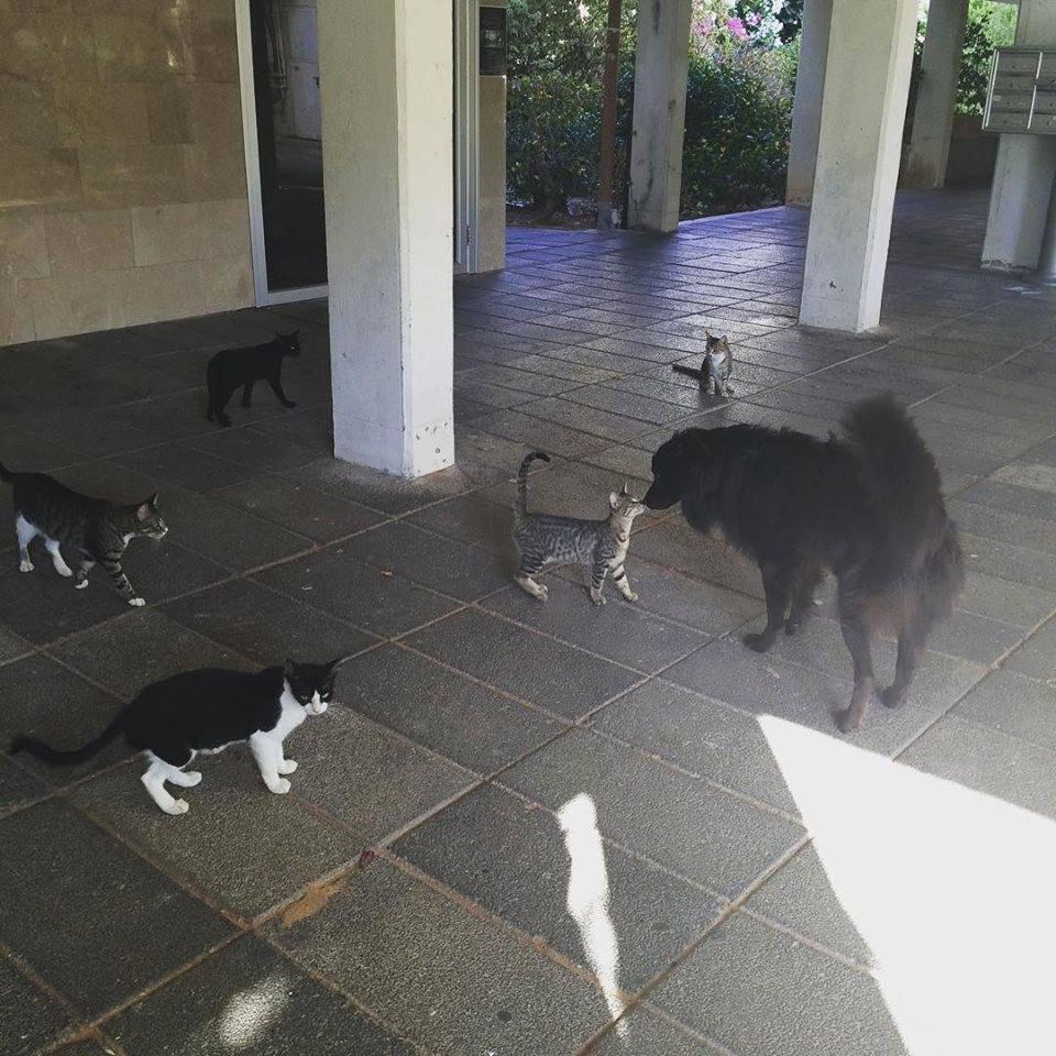 awwww-cute :     My dog is very popular among street cats (Source:  http://ift.tt/1XkwNgV )