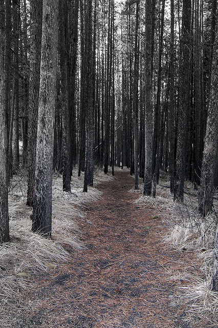 brutalgeneration :      Forest Walk  by  zebble  on Flickr.
