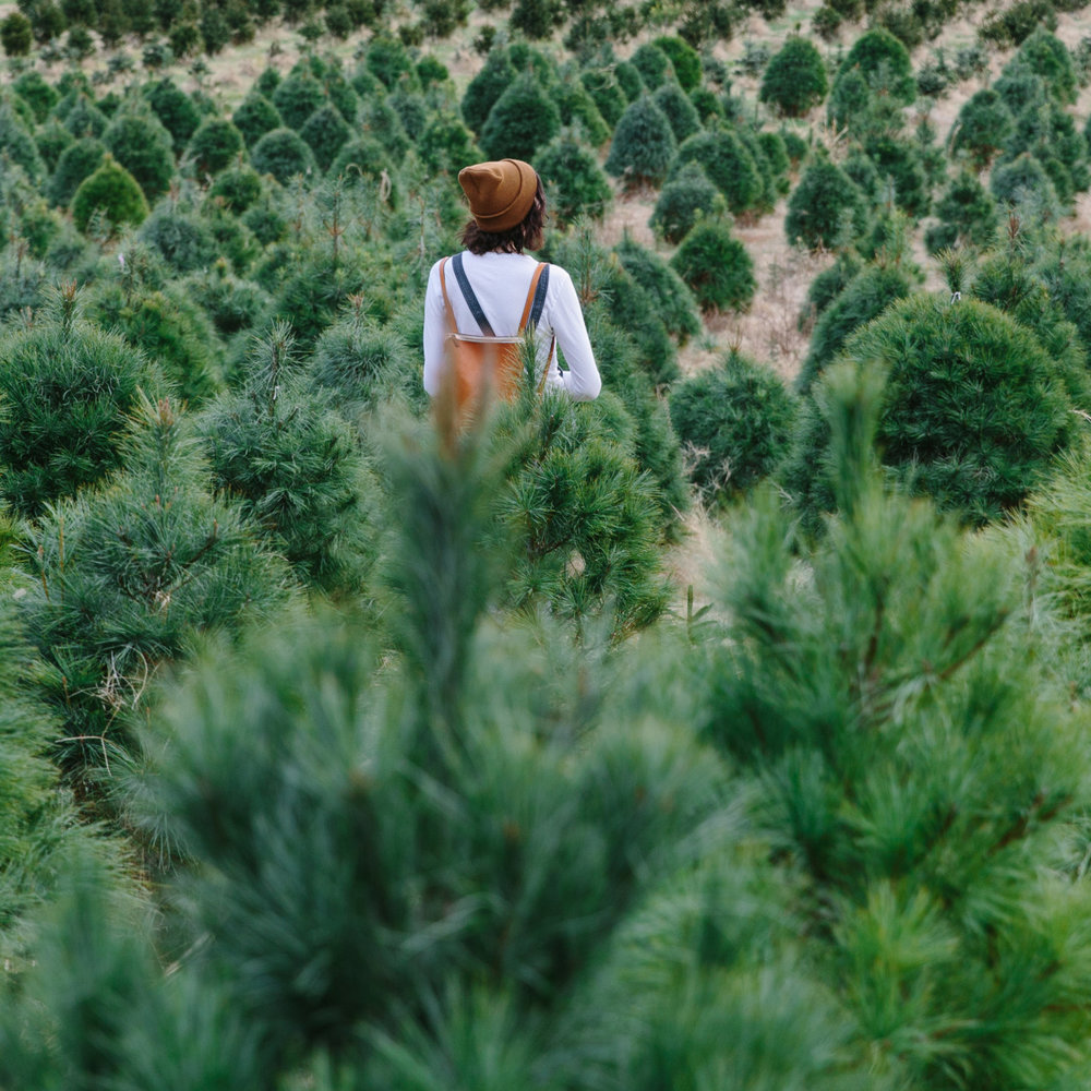 emilyblincoe :      christmas tree farming  with ruthie lindsey   december 2014   nashville, tennessee