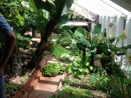 The greenhouse with exotic fruit being grown at 2.000+ meters of elevation.