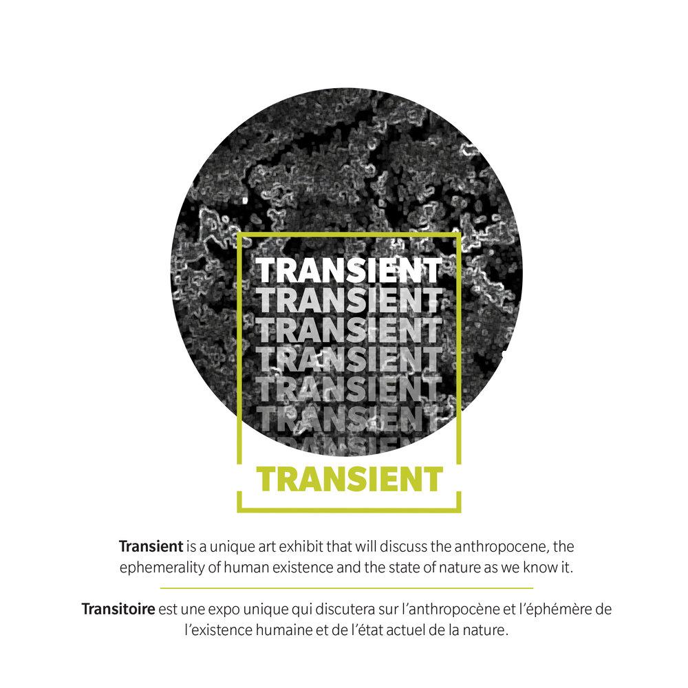 IG Transient.jpg