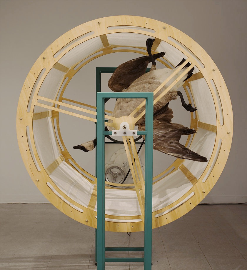 David McDougall,  Machined Migration , wood, steel, HDPE Plastic, fabric, taxidermied canada goose, electronics, 120cmx90cmx170cm 2017