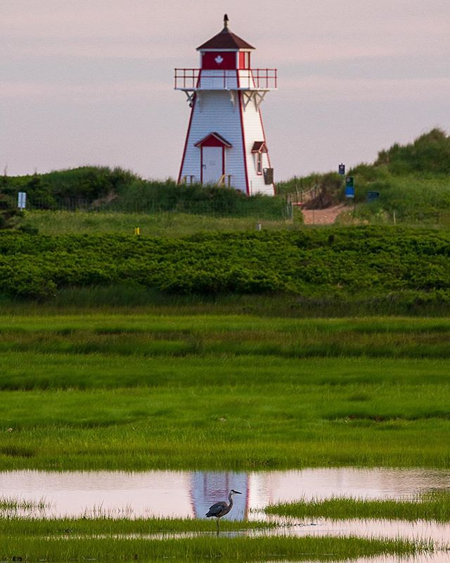A great blue heron posing in front of the most Canadian-looking lighthouse ever. I nearly spent the night on the beach nearby, but ended up behind the visitor center instead.