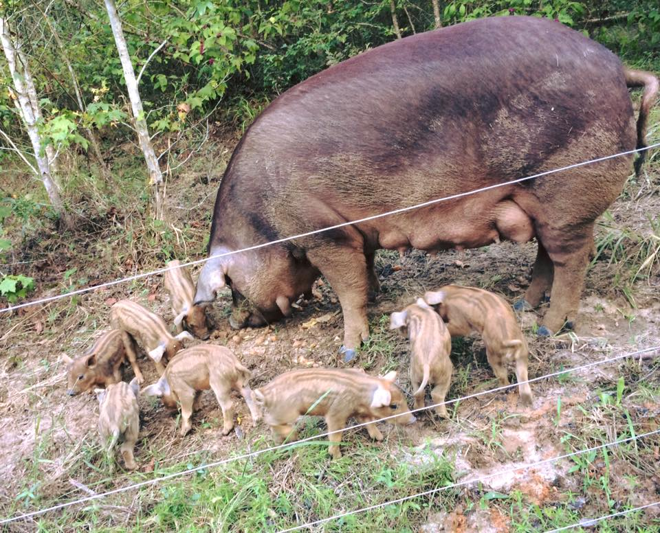 Pate and babies eating.jpg