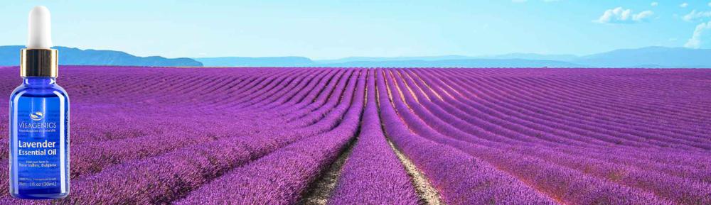 Organically Grown - Premium Lavender Essential Oilfrom VISAGENICS
