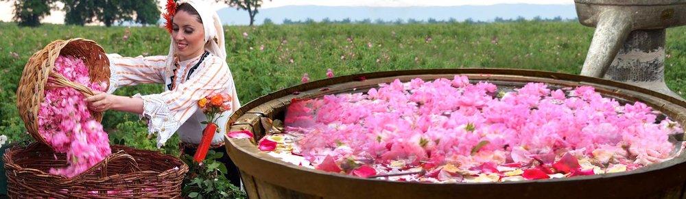 Visagenics_Bulgarian Rose Oil.jpg