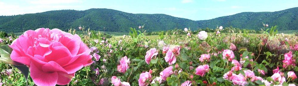 "Visagenics ""Rose Valley"" - home of the Visagenics farmlands and distillery in Bulgaria"