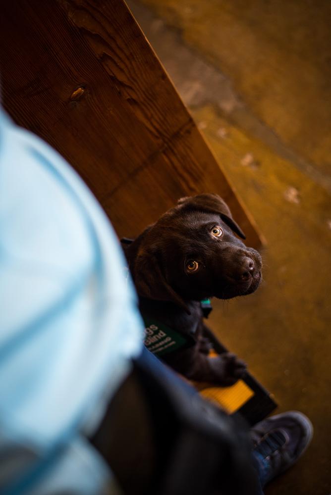 Lone-Star-Guide-Dogs-by-Weston-Carls.jpg
