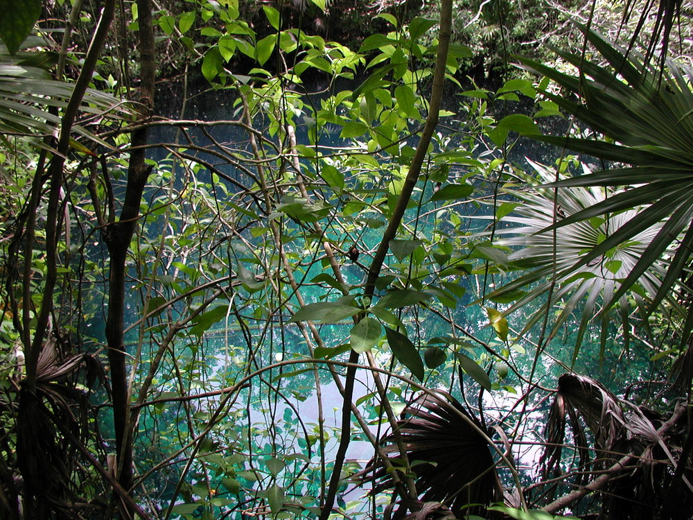 Hands down, the nicest cenote I have ever been part of finding using the 'dumb luck' method.