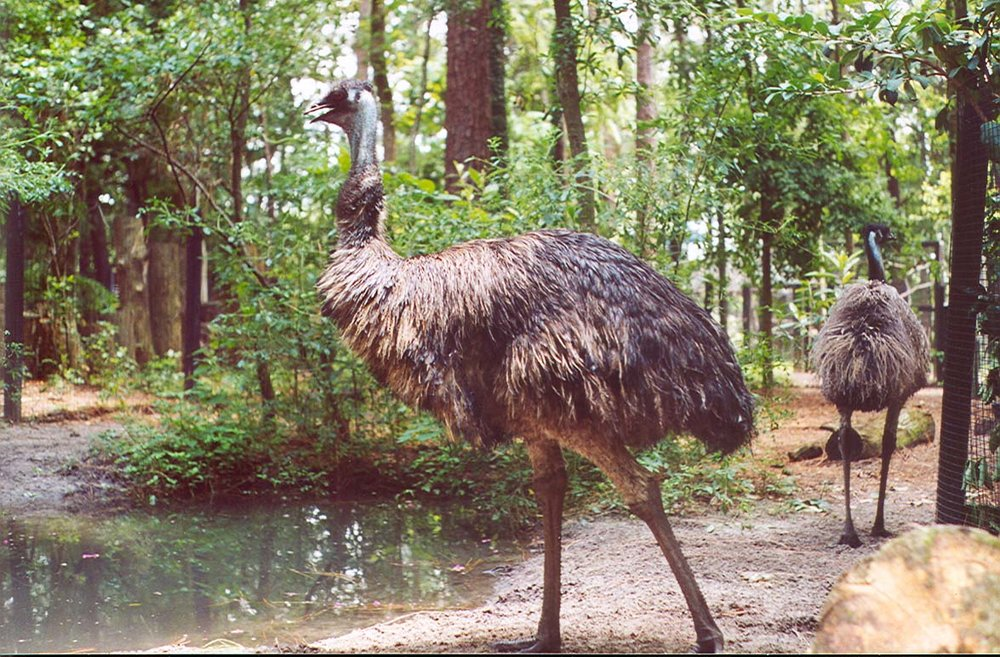 emu-wallpapers-25462-1858736.jpg