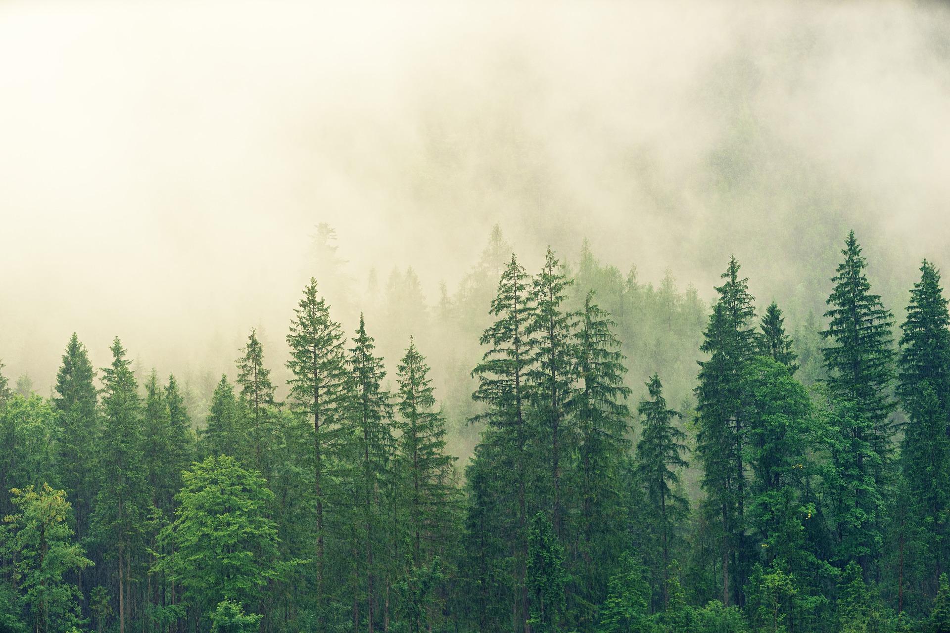 Sacred Spirit Shaman| Dream Dictionary| Pine Tree Symbolic Meaning