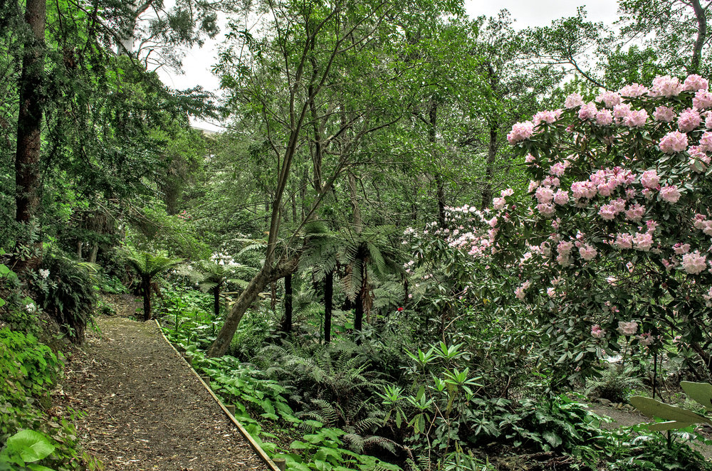 Easily accessible the Rhododendron Walk has a fabulous collection of flowers