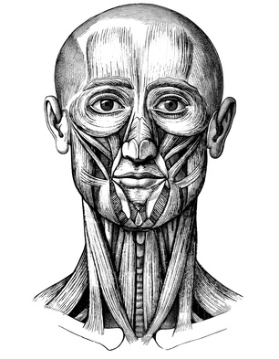 facial muscle illustration2.jpg