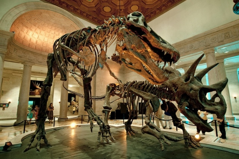 Natural history museum of los angeles county -