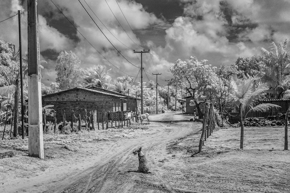 Scott_Myers_Brazil_Infrared-0925.jpg