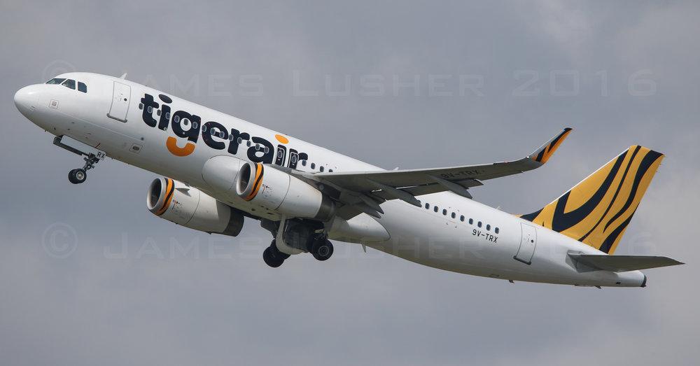 Tiger A320 (1 of 1).jpg
