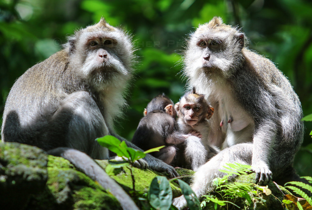 Monkey Forest 2 (1 of 1).jpg