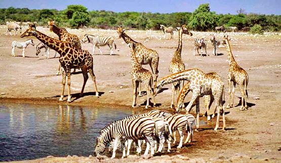 Namibia 4.jpg