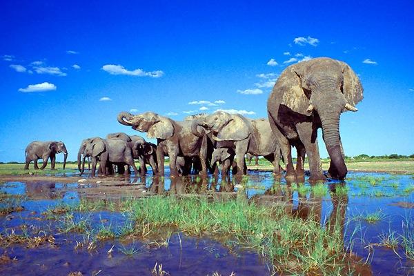 namibia-safaris.jpg