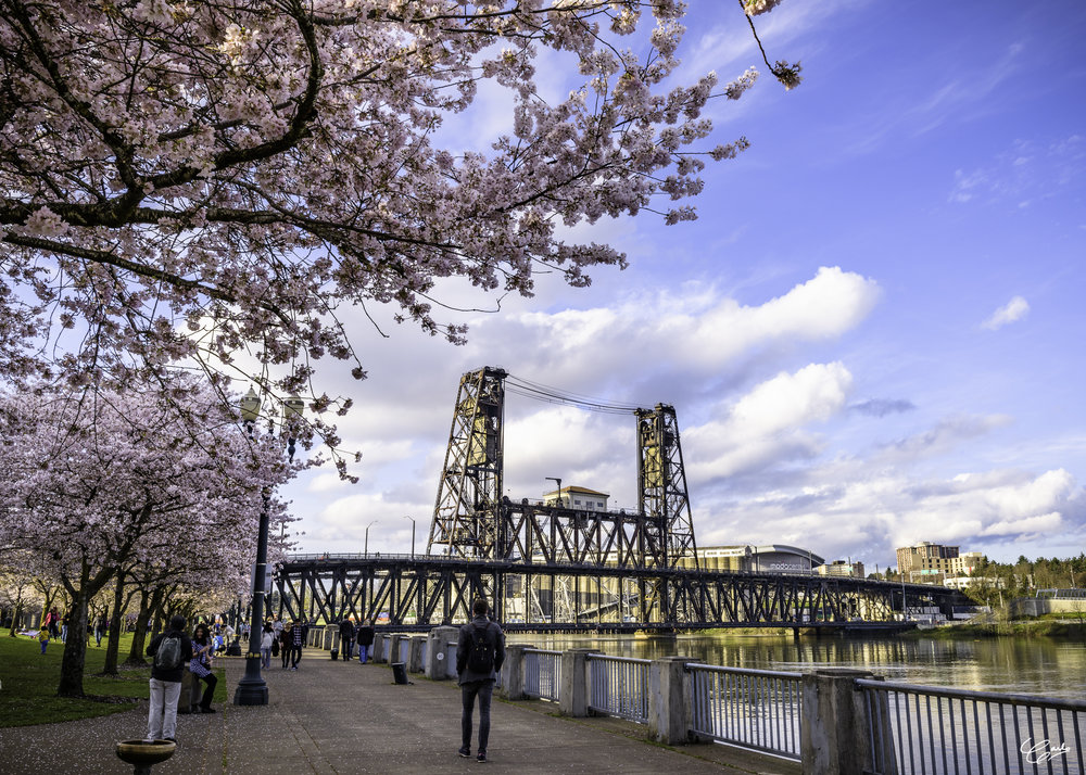 Portland's Old Steel Bridge as viewed from the Tom McCall Waterfront Park. Photo courtesy of Carlo Delumpa © 2017. All Rights Reserved.