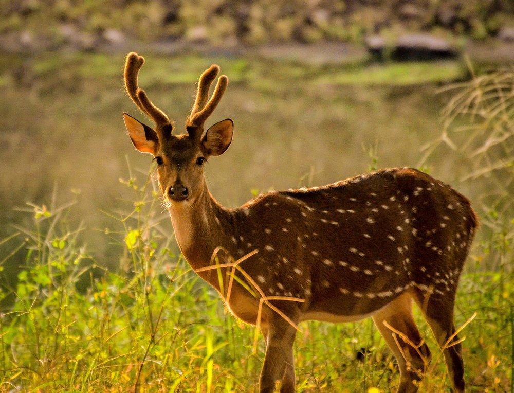 Ranthambore National Park, Ranthambore, India 2012