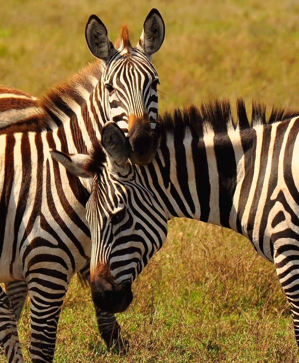 Serengeti, Tanzania, Africa 2009