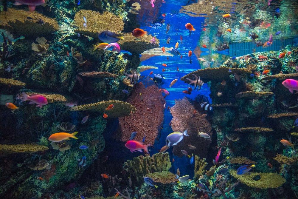 Shanghai Ocean Aquarium. Shanghai, China 2016