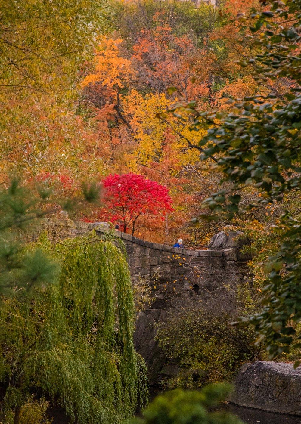 Fall Central Park. New York, NY 2016