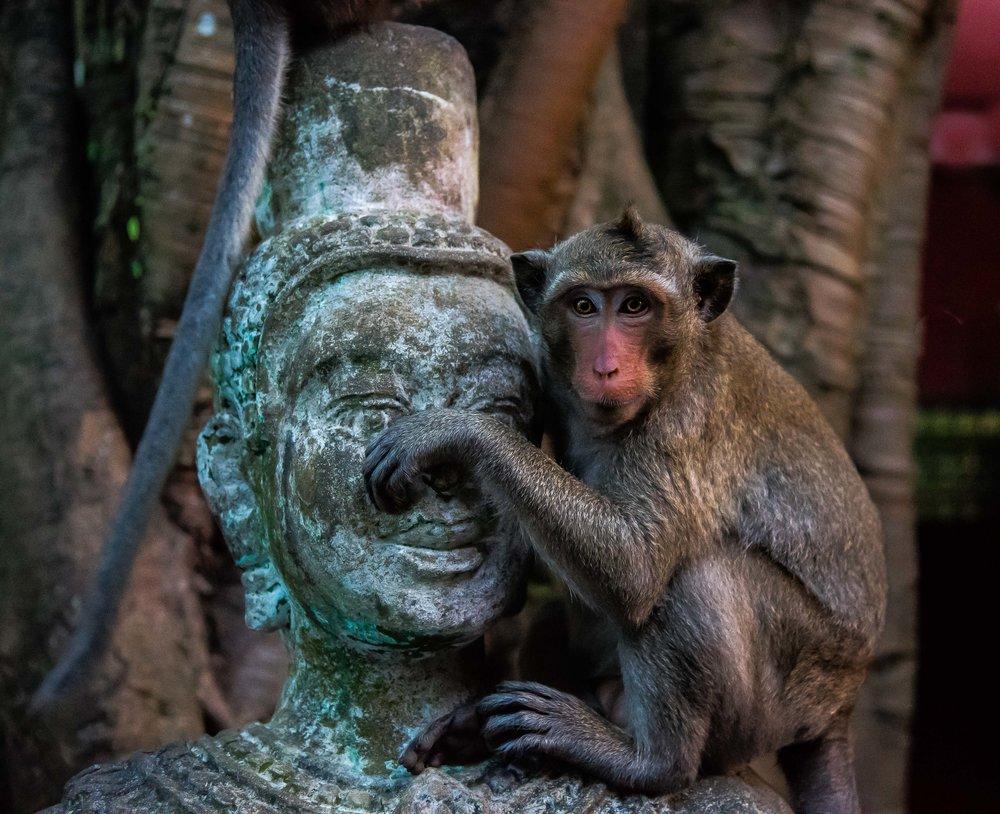 Cambodian Monkey - Wat Leu Temple. Sihanoukville, Cambodia 2015