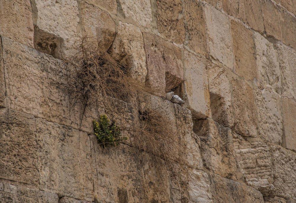 Western Wall, Jerusalem, Israel 2017