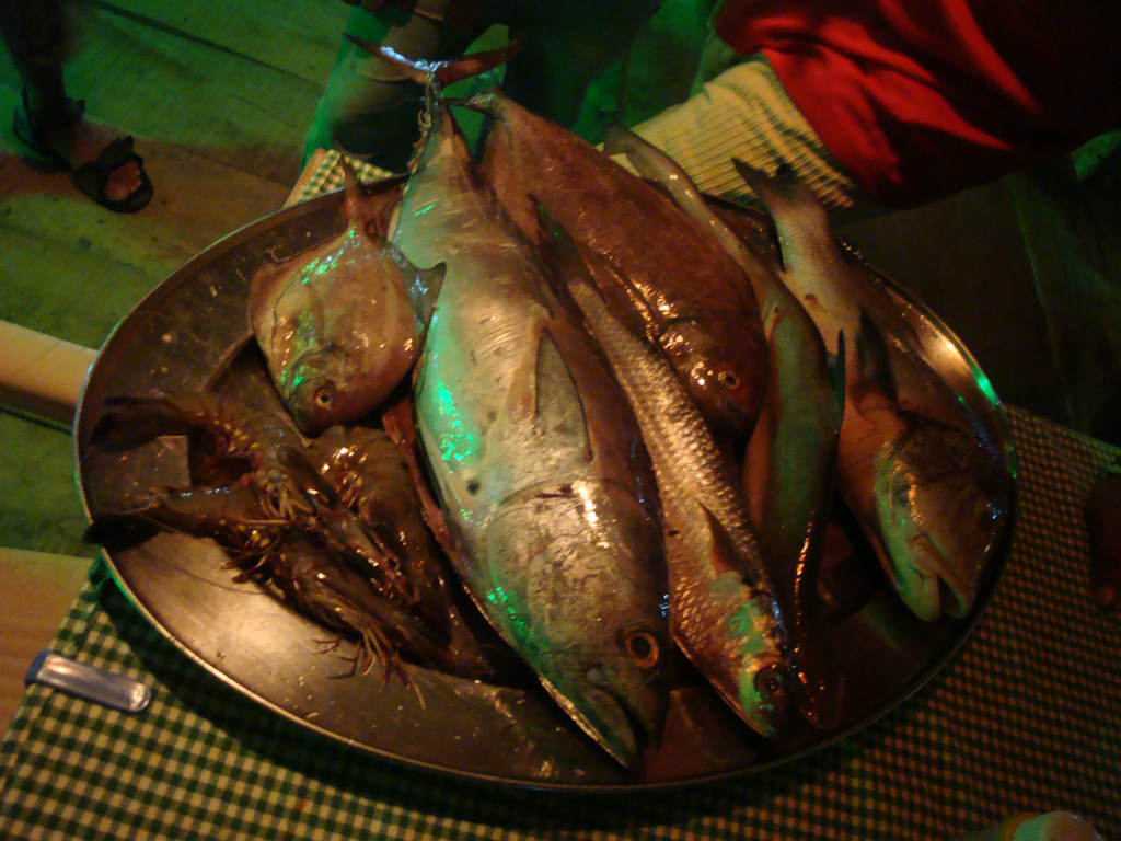 fresh fish from the sea