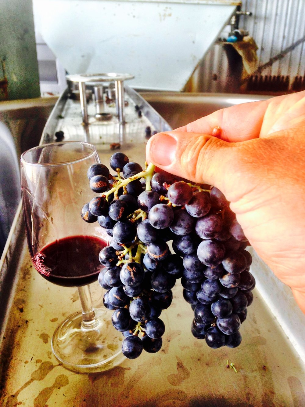The 2016 Vintage (in the glass) and the 2017 vintage (just after picking)