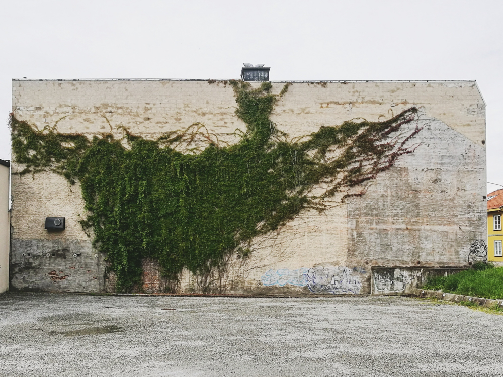 Hamars fineste vegg