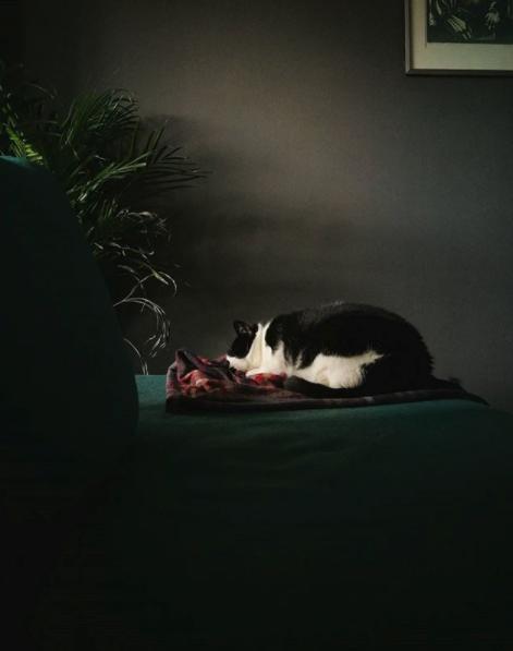 I Oslo bodde jeg sammen med to nydelige katter, denne bolla her er en av dem!