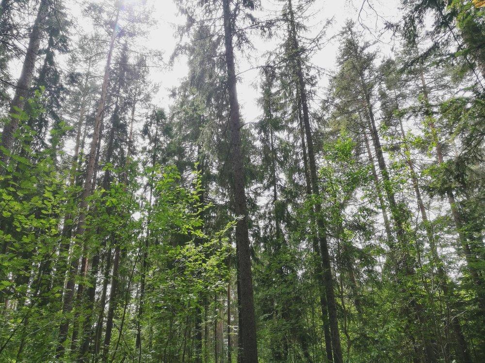 Det ble flere skogsturer i juni, endelig!