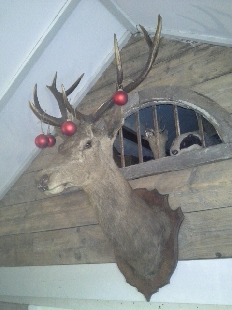 Wonderful large stags head, great condition in festive livery! SOLD