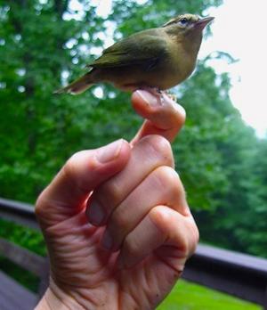 bird-hand©samana.jpg