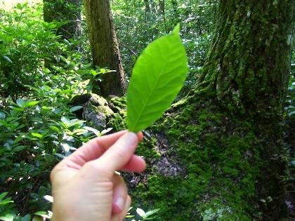 every leaf © Samana