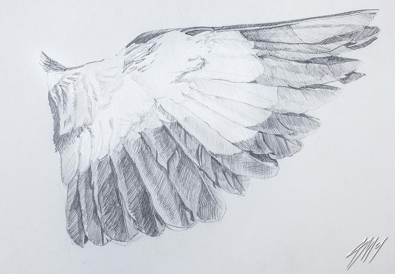 Minor-Wing-original-1_.jpg