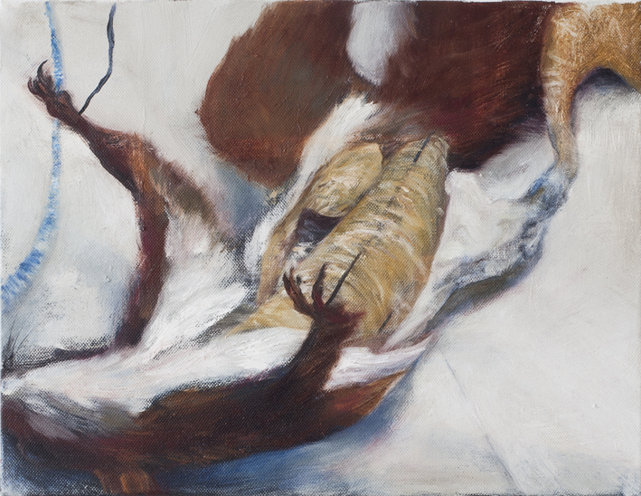 Display (Taxidermy) III  Oil on canvas 27 x 35 cm 2013
