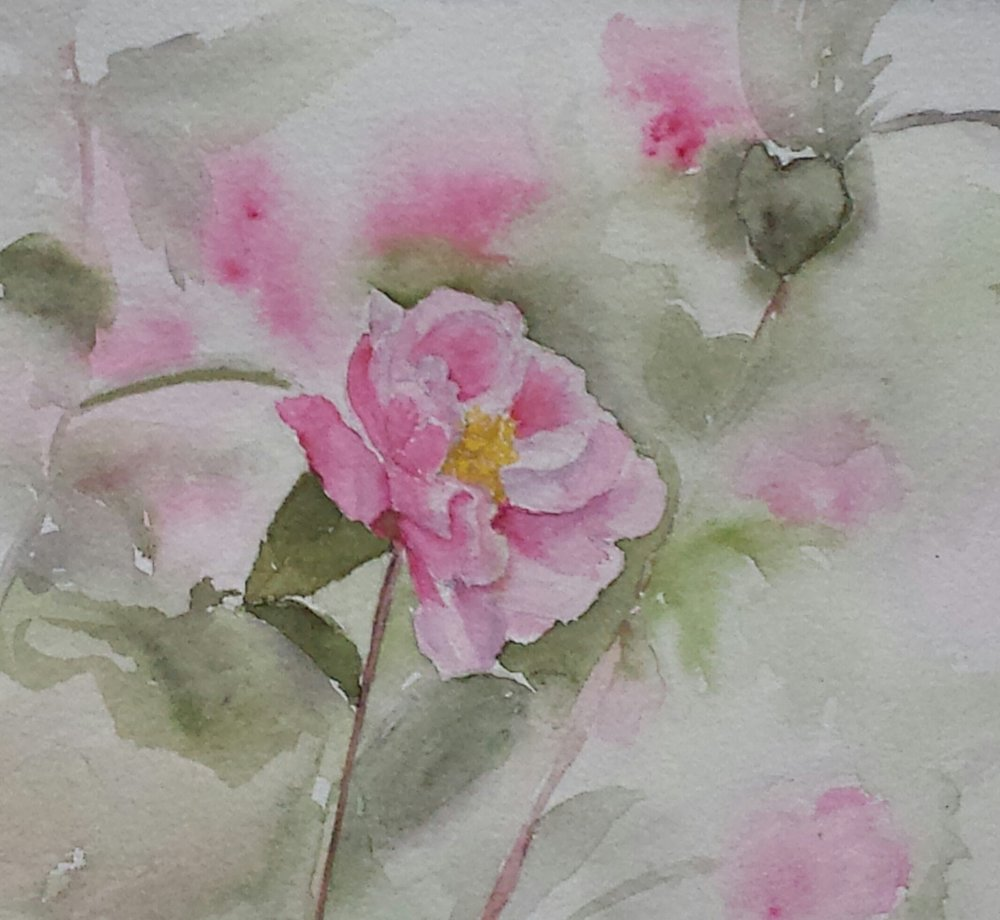 Rose, 2016, watercolor.