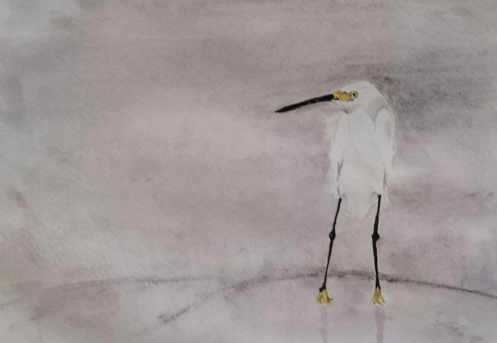 Snowy Egret, North Carolina, 2016, pen and watercolor.
