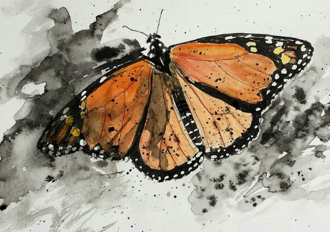 """Butterfly, pen and ink and watercolor, 6"""" x 8"""", 2016"""
