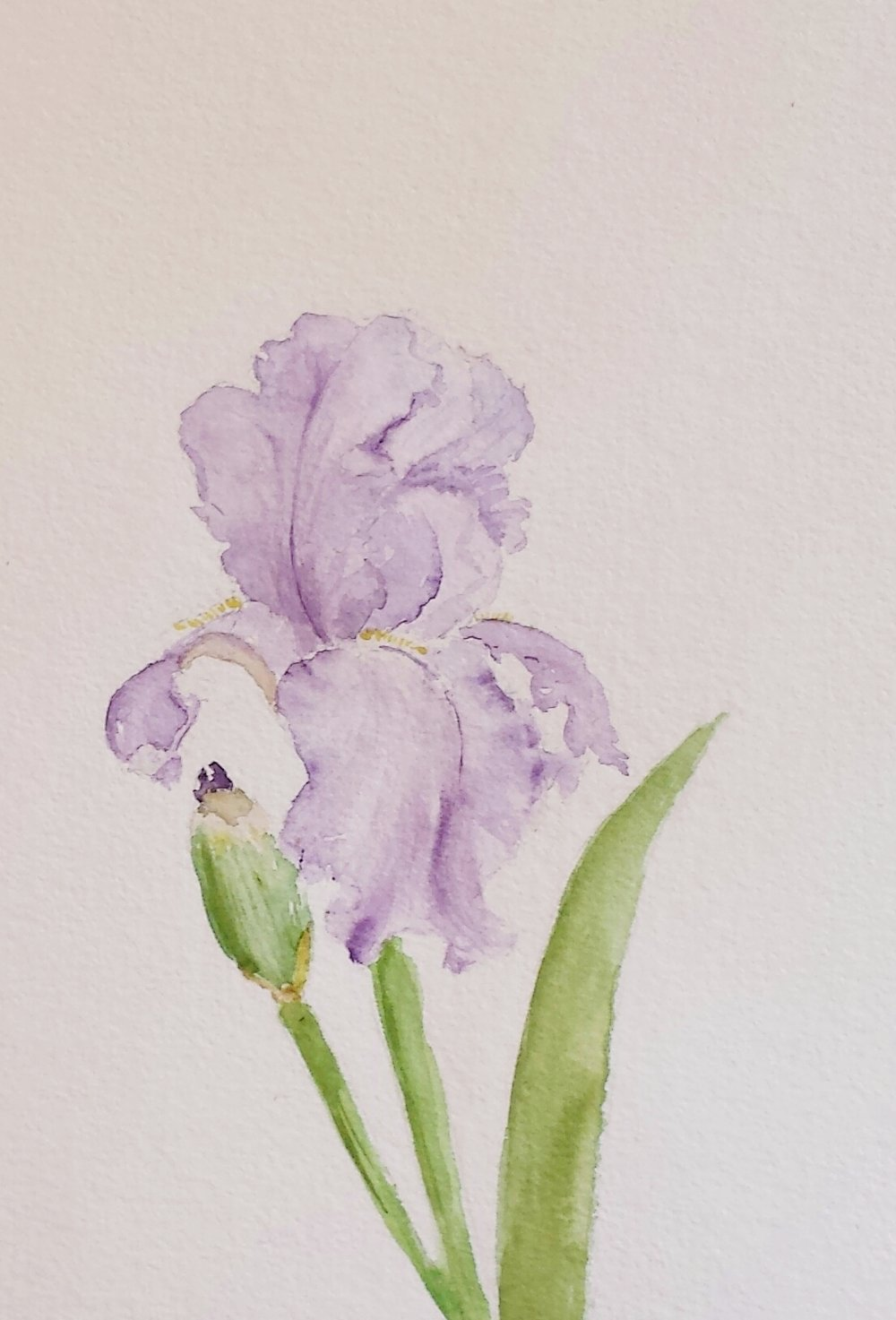 Iris, 2016, watercolor.