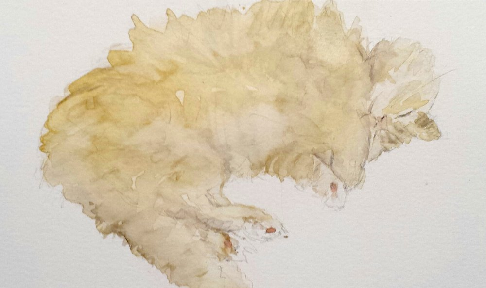 Sleeping cat, watercolor, 2016