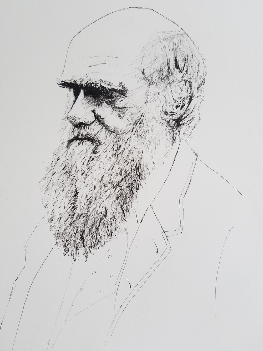 Charles Darwin, pen and ink, 2017